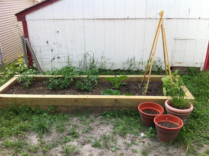 my darling garden