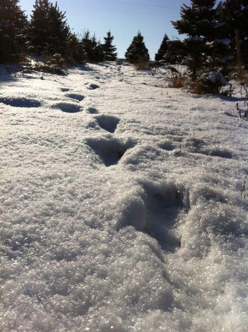 snow at the tree farm